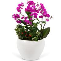만천홍 백자분, 전국당일꽃배달